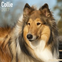 Collie Wall Calendar 2017