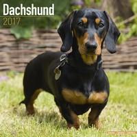 Dachshund Wall Calendar 2017
