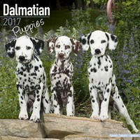 Dalmatian Puppies Wall Calendar 2017