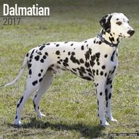 Dalmatian Wall Calendar 2017