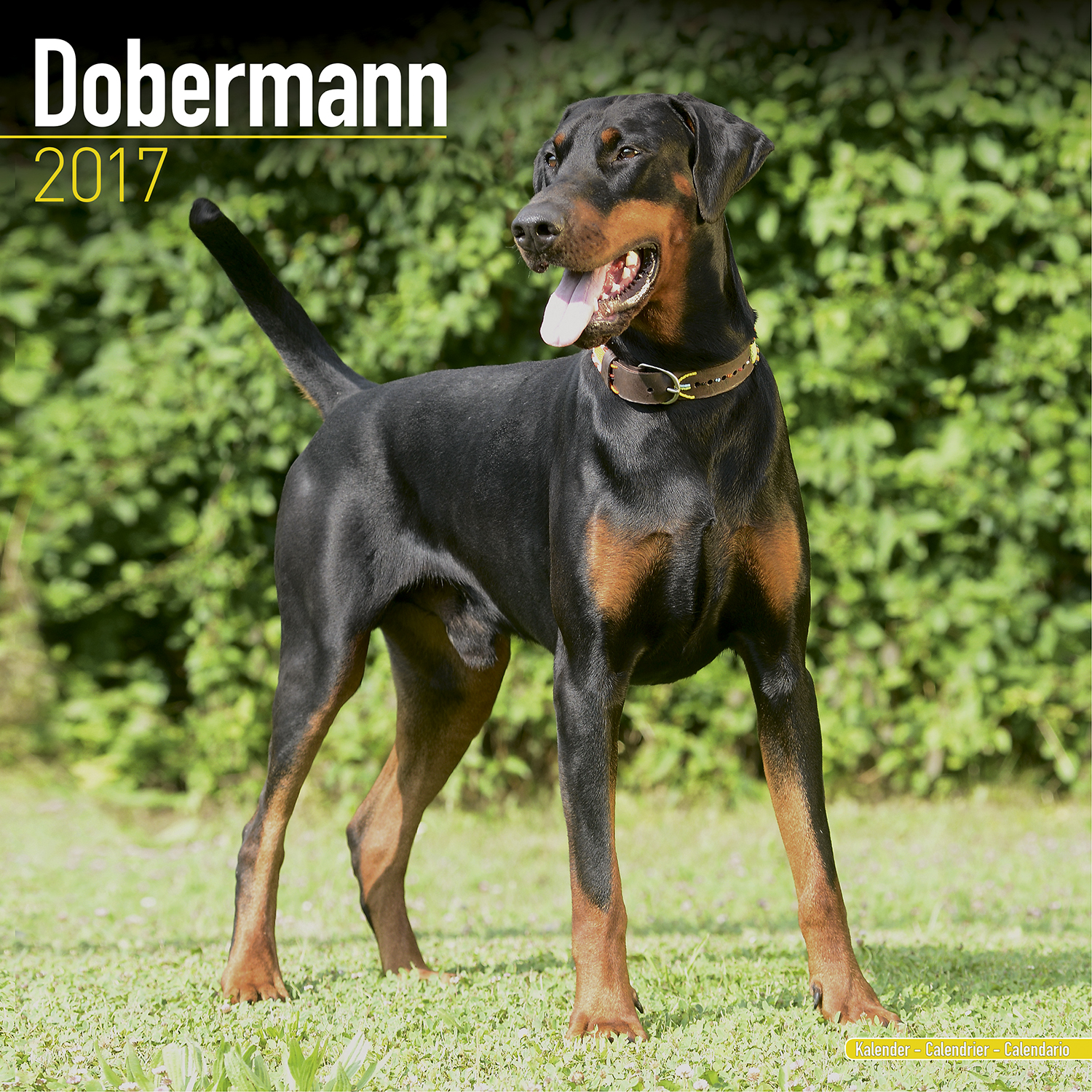 dobermann euro calendar 2017 pet prints inc. Black Bedroom Furniture Sets. Home Design Ideas