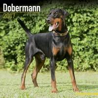 Dobermann (Euro) Wall Calendar 2017