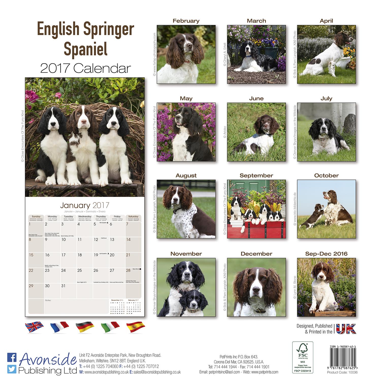 Quantity Of Dog Food For Spranger Spaniel