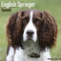Eng Springer Spaniel (Euro) Wall Calendar 2017