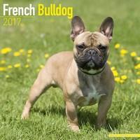 French Bulldog Wall Calendar 2017