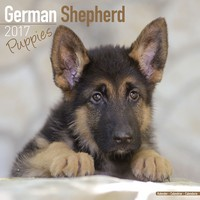 German Shepherd Puppies Wall Calendar 2017