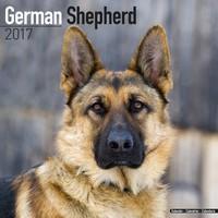 German Shepherd Wall Calendar 2017