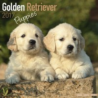 Golden Retriever Puppies Wall Calendar 2017