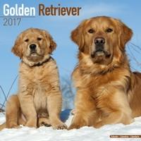 Golden Retriever Wall Calendar 2017