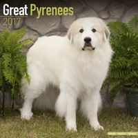 Great Pyrenees Wall Calendar 2017