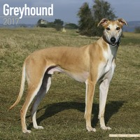Greyhound Wall Calendar 2017