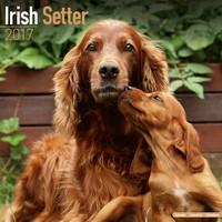 Irish Setter Wall Calendar 2017