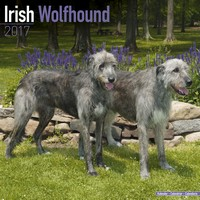Irish Wolfhound Wall Calendar 2017