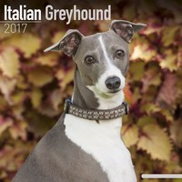 Italian Greyhound Wall Calendar 2017