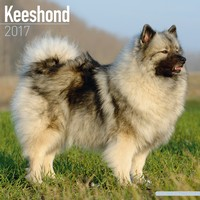 Keeshond Wall Calendar 2017