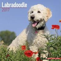 Labradoodle Wall Calendar 2017