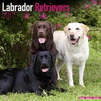 Labrador Ret (Mixed) Wall Calendar 2017