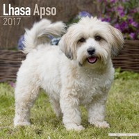 Lhasa Apso Wall Calendar 2017