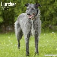 Lurcher  Wall Calendar 2017