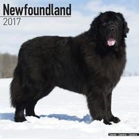 Newfoundland Wall Calendar 2017