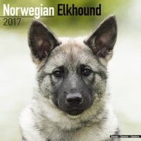 Norwegian Elkhound Wall Calendar 2017