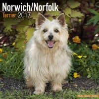 Norwich/Norfolk Terrier Wall Calendar 2017