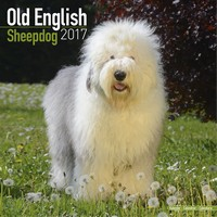 Old English Sheepdog Wall Calendar 2017