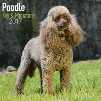 Poodle (Toy & Miniature) Wall Calendar 2017