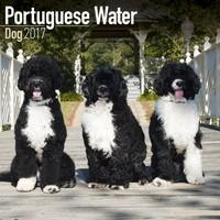 Portuguese Waterdog Wall Calendar 2017