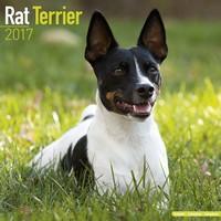 Rat Terrier Wall Calendar 2017