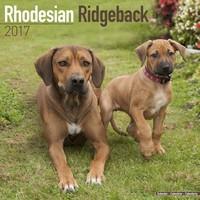 Rhodesian Ridgeback Wall Calendar 2017