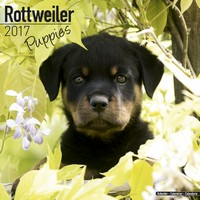 Rottweiler Puppies Wall Calendar 2017