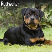 Rottweiler Wall Calendar 2017