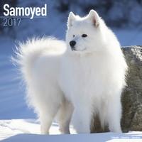Samoyed Wall Calendar 2017