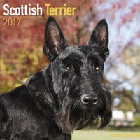 Scottish Terrier Wall Calendar 2017