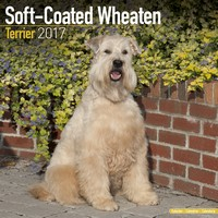 Softcoat Wheaten Terrier Wall Calendar 2017