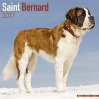 St Bernard Wall Calendar 2017
