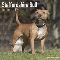 Staffordshire Bull Terrier Wall Calendar 2017