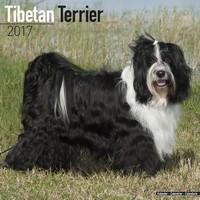 Tibetan Terrier Wall Calendar 2017