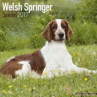 Welsh Springer Spaniel Wall Calendar 2017