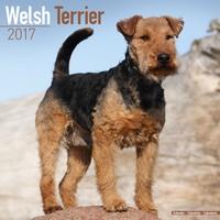 Welsh Terrier Wall Calendar 2017