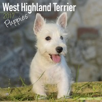 West Highland Terrier Puppies Wall Calendar 2017