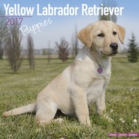 Yellow Labrador Puppies Wall Calendar 2017