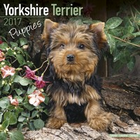 Yorkshire Terrier Puppies Wall Calendar 2017