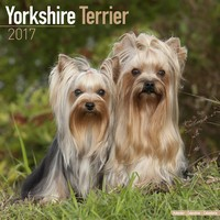Yorkshire Terrier Wall Calendar 2017