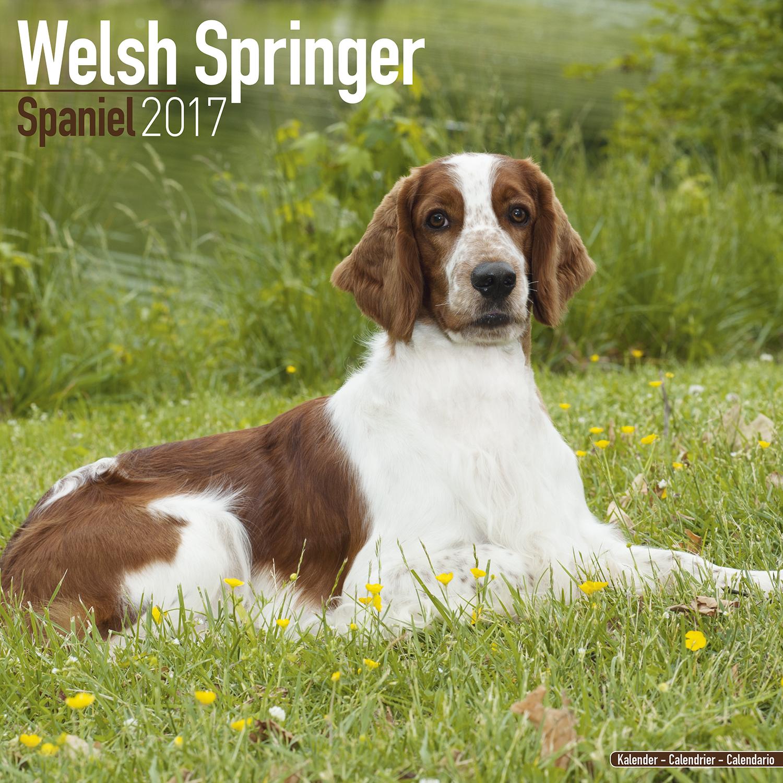 Welsh Springer Spaniel Calendar 2017 10119-17 | Dog Breeds